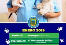 ESTERILIZACIÓN GRATUITA PARA MASCOTAS 2019