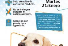 CONSULTA VETERINARIA GRATUITA Y LEY DE TENENCIA RESPONSABLE DE MASCOTAS Y ANIMALES DE COMPAÑÍA